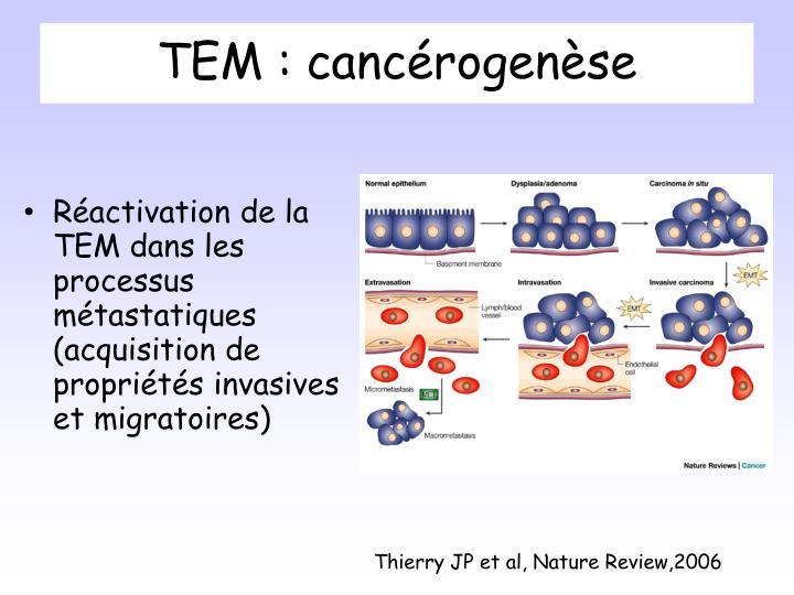 TEM : cancérogenèse