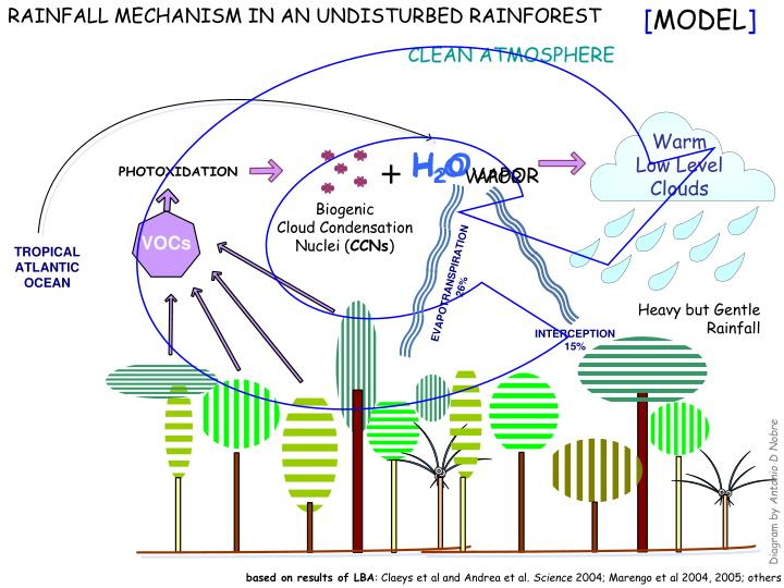 RAINFALL MECHANISM IN AN UNDISTURBED RAINFOREST