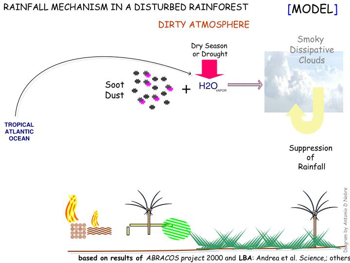 RAINFALL MECHANISM IN A DISTURBED RAINFOREST