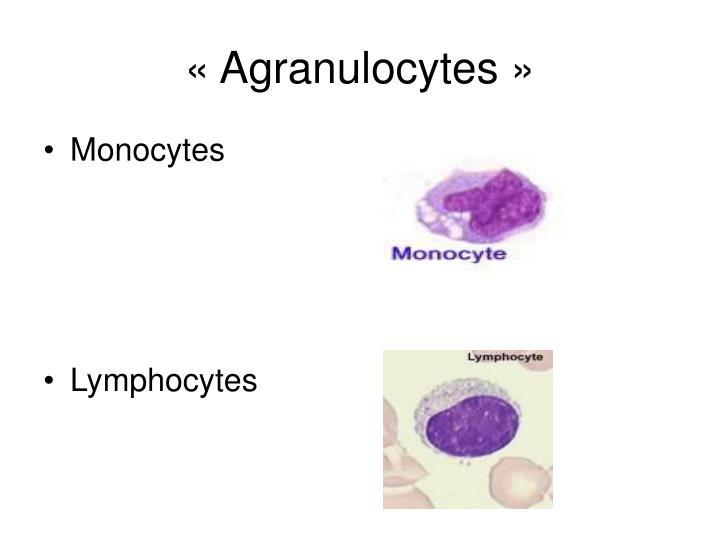 «Agranulocytes»