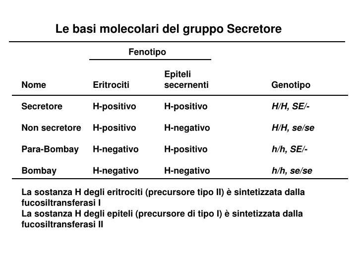 Le basi molecolari del gruppo Secretore