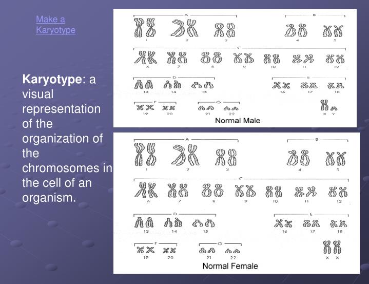 Make a Karyotype