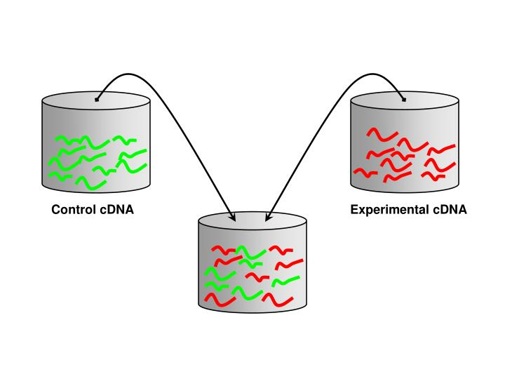 Control cDNA