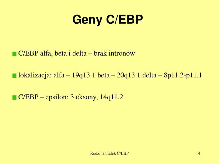 Geny C/EBP
