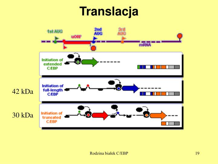 Translacja