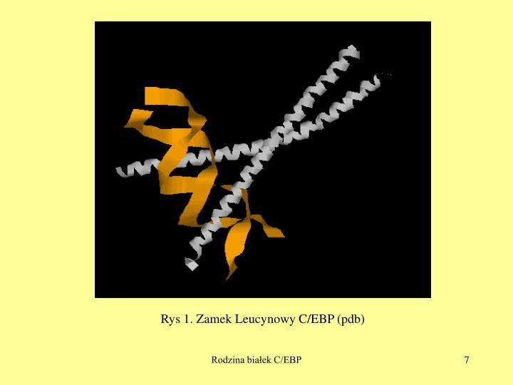 Rys 1. Zamek Leucynowy C/EBP (pdb)
