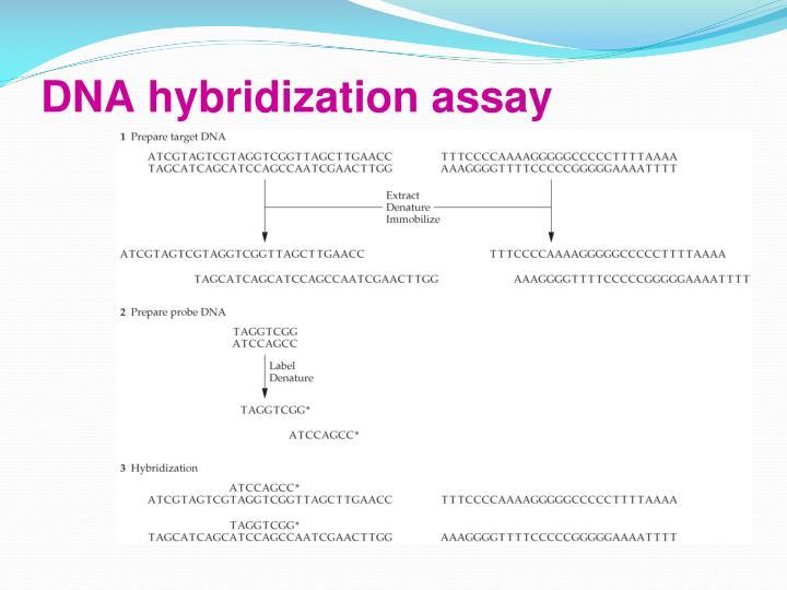 DNA hybridization assay
