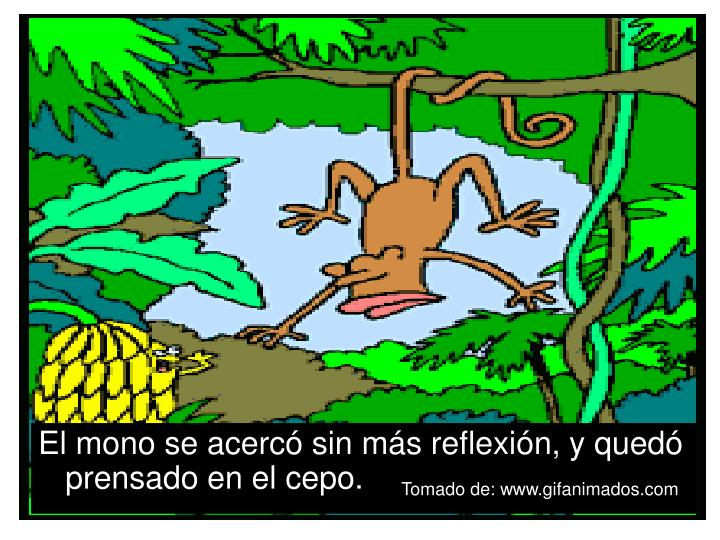 El mono se acercó sin más reflexión, y quedó prensado en el cepo.