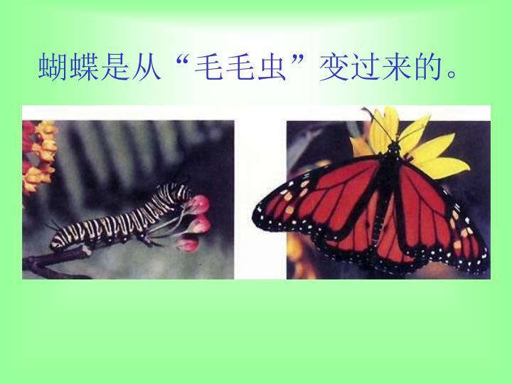 """蝴蝶是从""""毛毛虫""""变过来的。"""