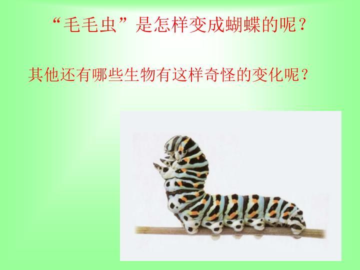 """""""毛毛虫""""是怎样变成蝴蝶的呢?"""