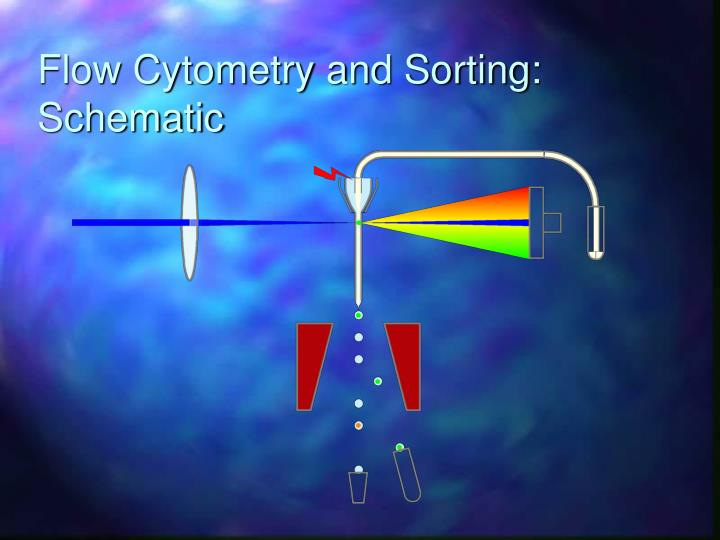 Flow Cytometry and Sorting: Schematic