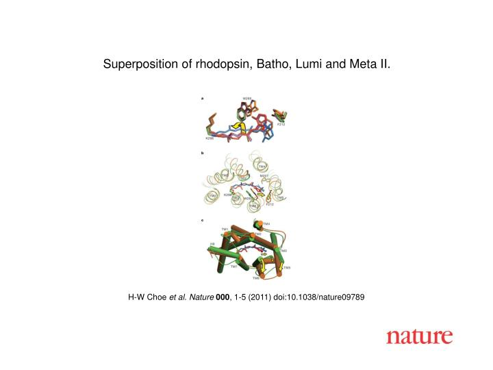 Superposition of rhodopsin, Batho, Lumi and Meta II.