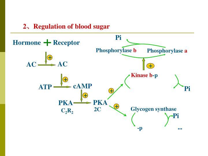 Hormone       Receptor