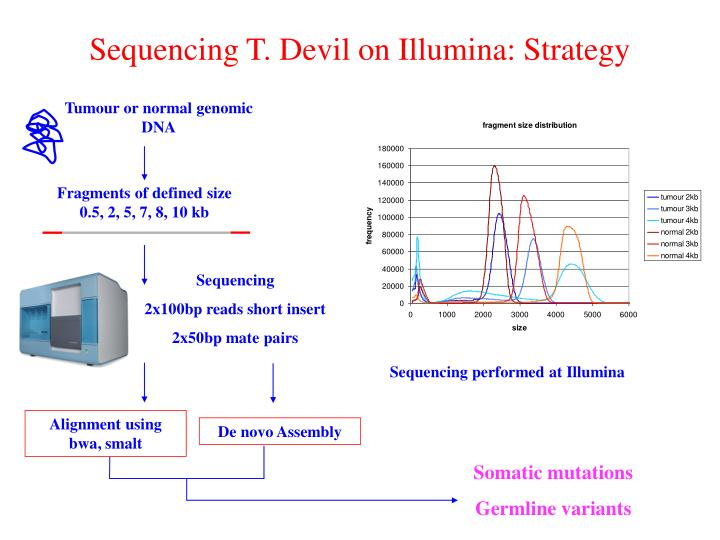 Sequencing T. Devil on Illumina: Strategy