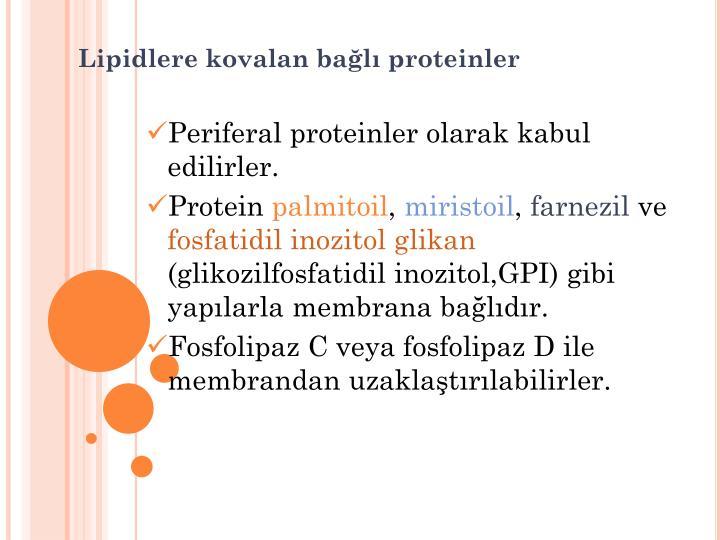 Lipidlere kovalan bağlı proteinler
