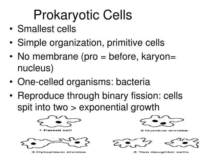 Prokaryotic Cells