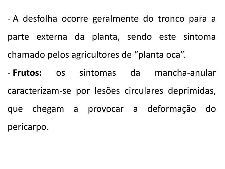 """A desfolha ocorre geralmente do tronco para a parte externa da planta, sendo este sintoma chamado pelos agricultores de """"planta oca""""."""