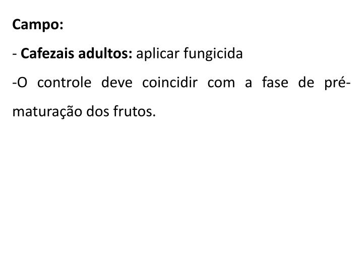 Campo: