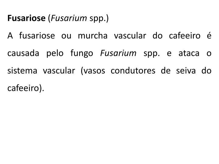Fusariose