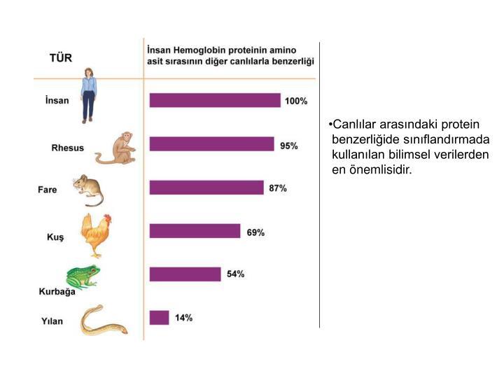 Canlılar arasındaki protein
