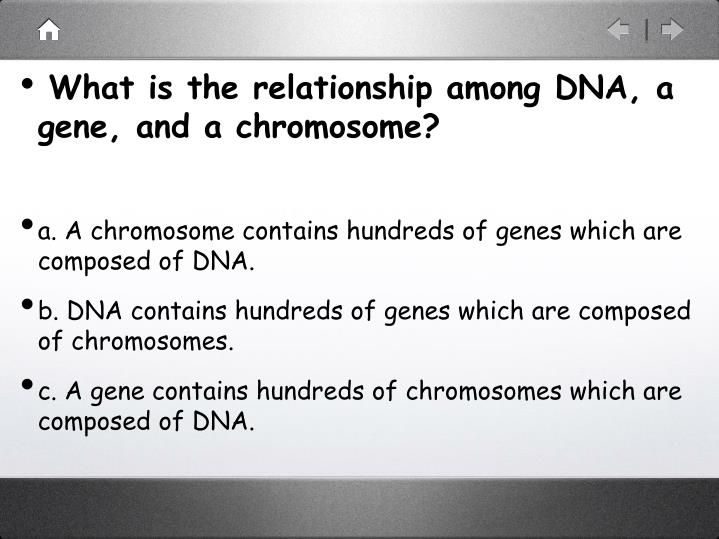 What is the relationship among DNA, a gene, and a chromosome?