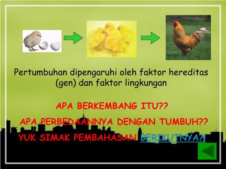 Pertumbuhan dipengaruhi oleh faktor hereditas (gen) dan faktor lingkungan
