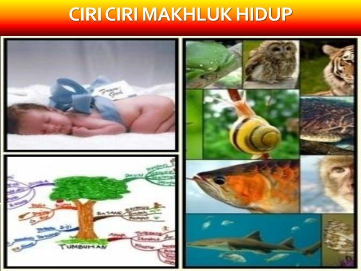 CIRI CIRI MAKHLUK HIDUP
