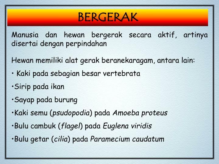 BERGERAK