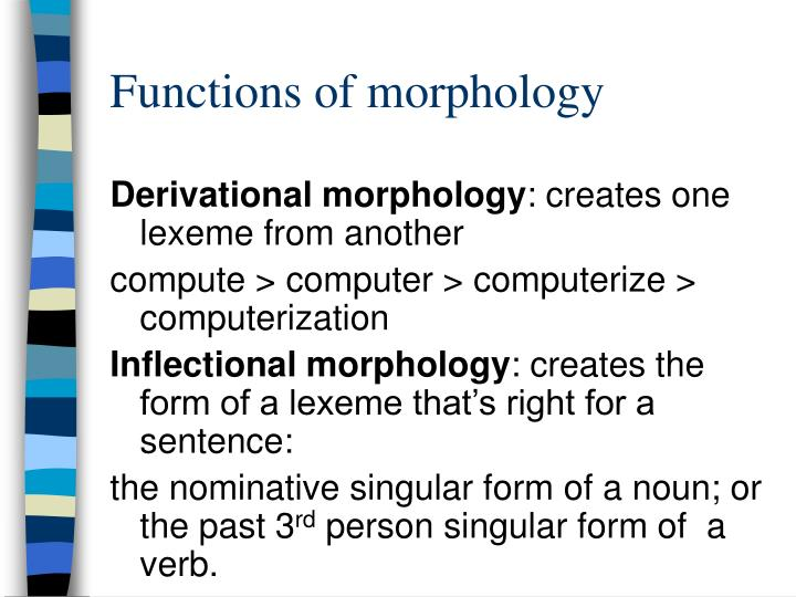 Functions of morphology