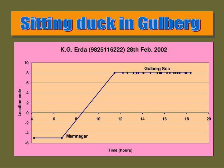 Sitting duck in Gulberg