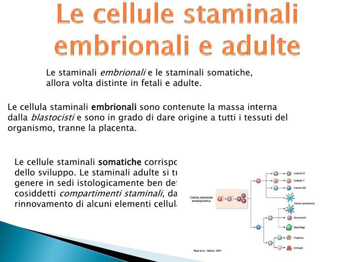 Le cellule staminali embrionali e adulte