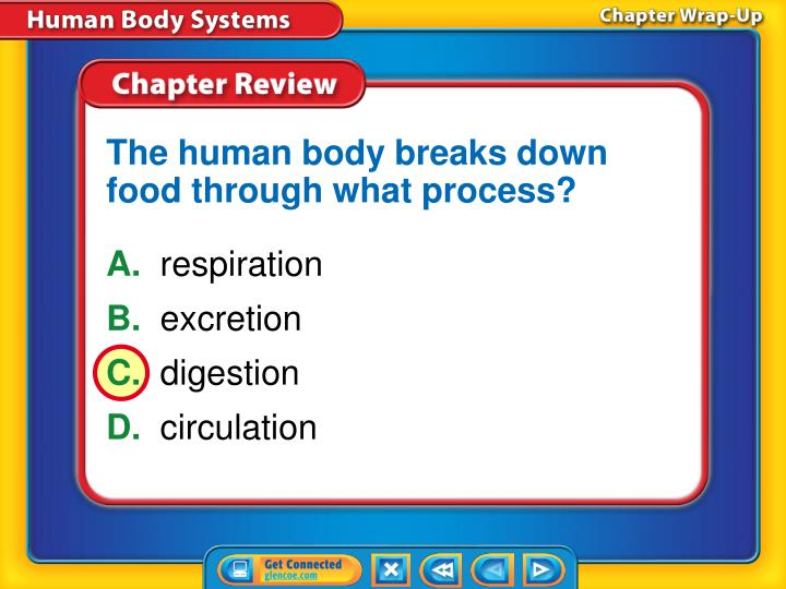 The human body breaks down food through what process?