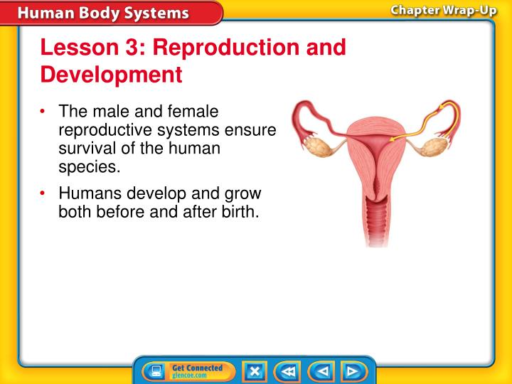 Lesson 3: Reproduction and Development