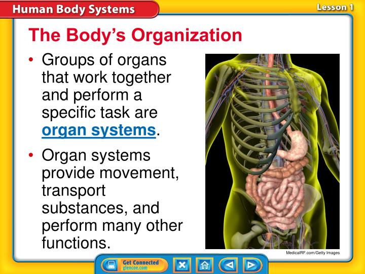 The Body's Organization