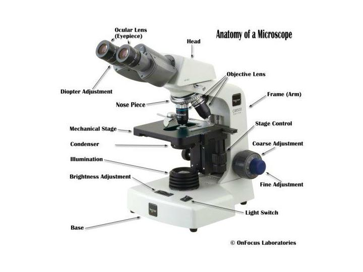 Nobelprize educational physics microscopes tem gallery index html
