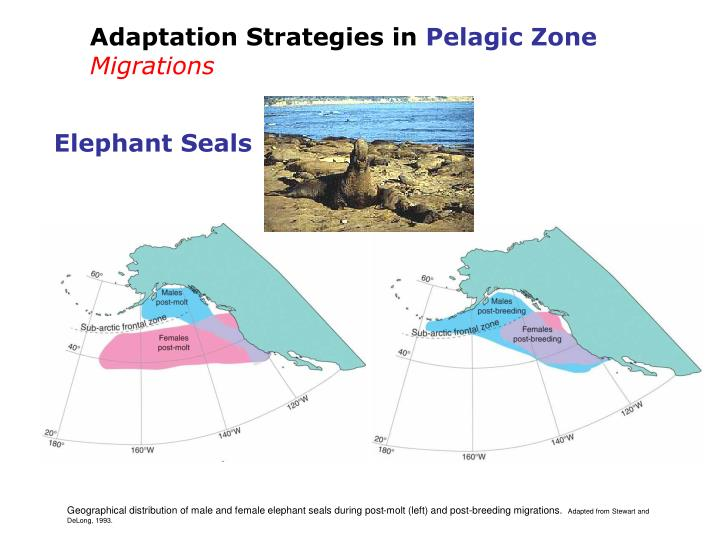 Adaptation Strategies in