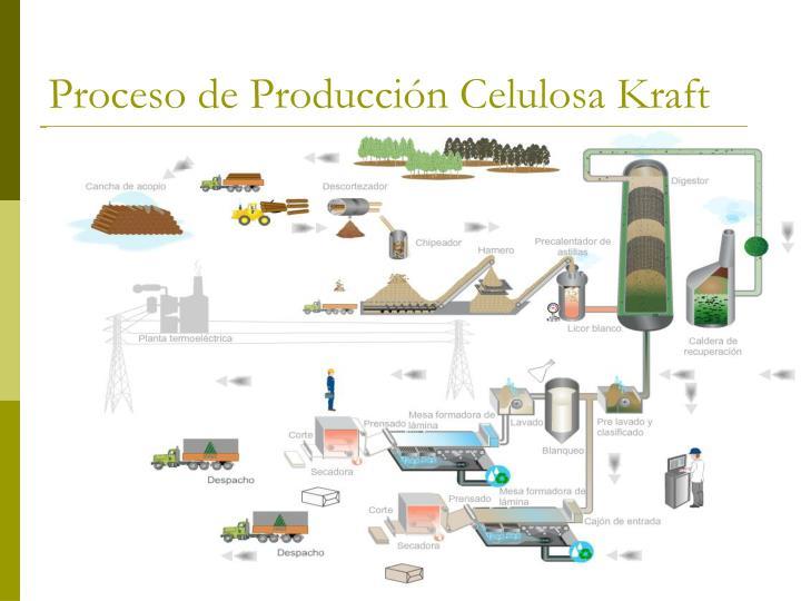 Proceso de Producción Celulosa Kraft