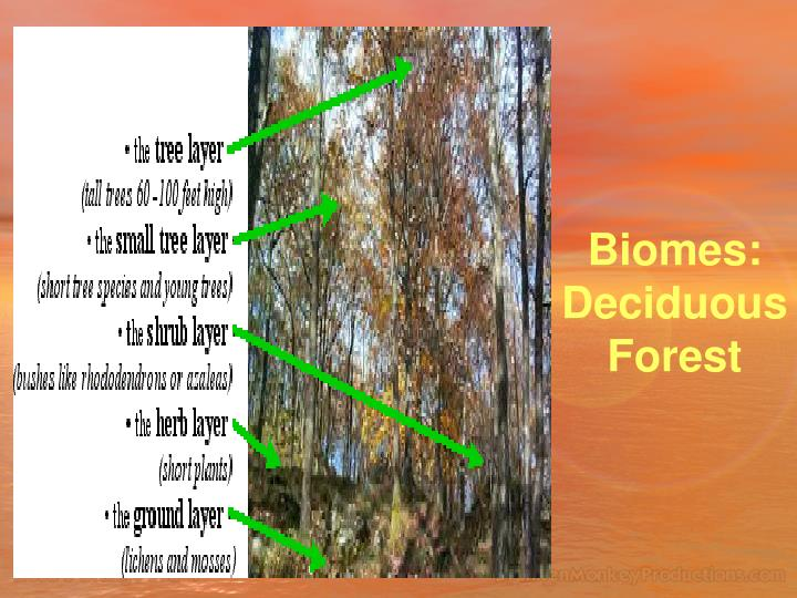 Biomes: