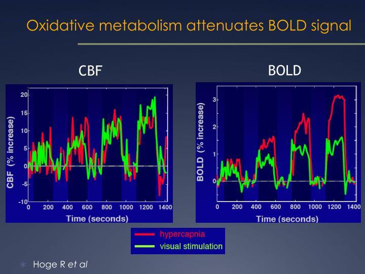 Oxidative metabolism attenuates BOLD signal