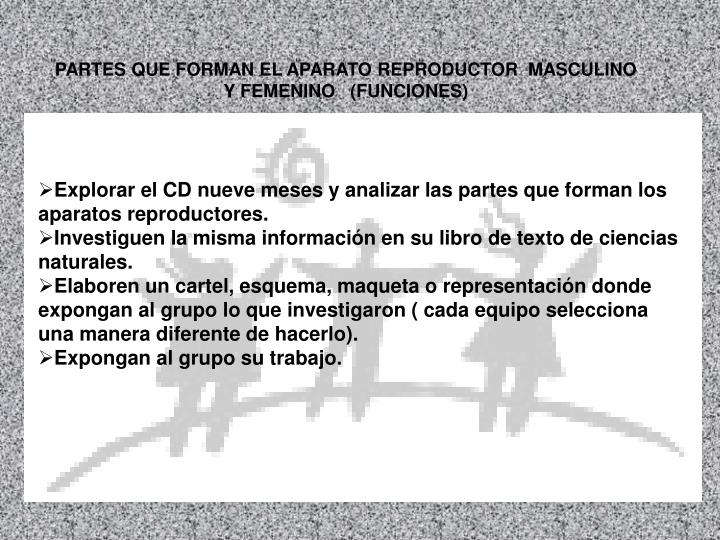 PARTES QUE FORMAN EL APARATO REPRODUCTOR  MASCULINO  Y FEMENINO   (FUNCIONES)