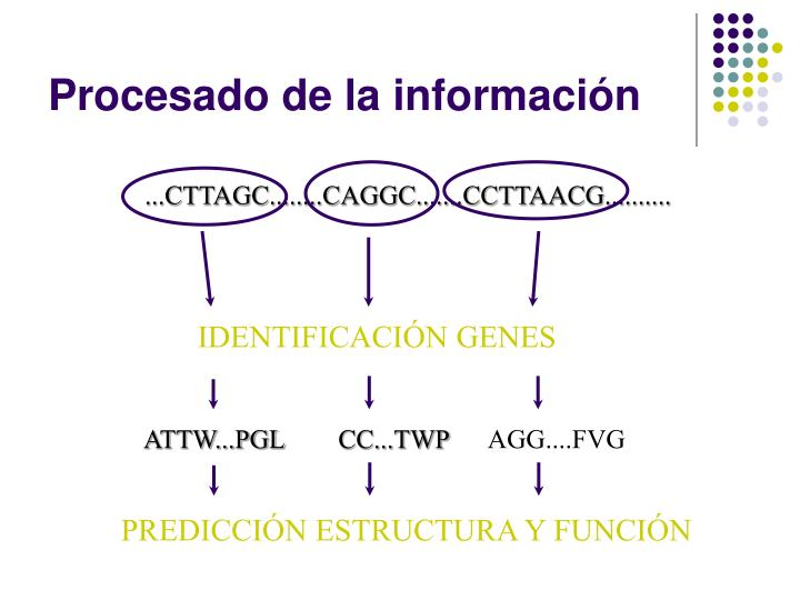 IDENTIFICACIÓN GENES