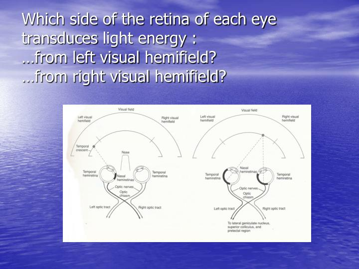 Which side of the retina of each eye