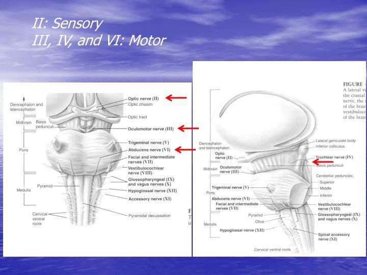 II: Sensory
