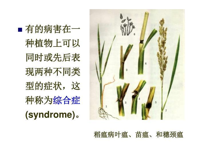 有的病害在一种植物上可以同时或先后表现两种不同类型的症状,这种称为