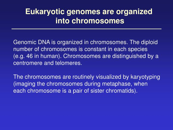 Eukaryotic genomes are organized