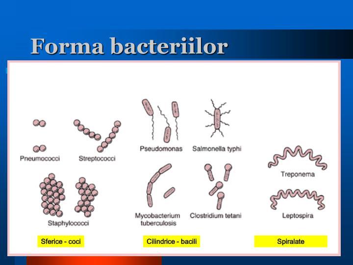 Forma bacteriilor