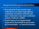 importan a procariotelor1