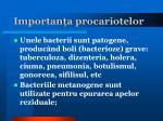 importan a procariotelor3