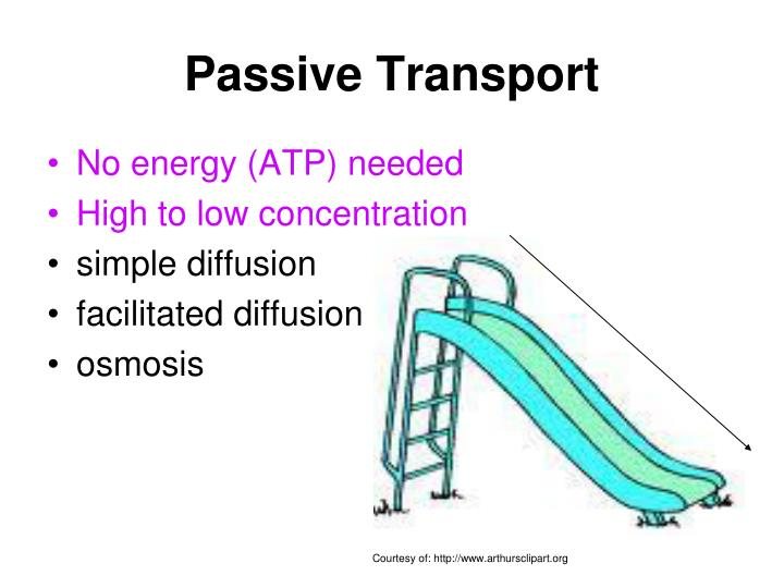 PPT - CELL TRANSPORT PowerPoint Presentation - ID:3996195  Example Of Passive Transport