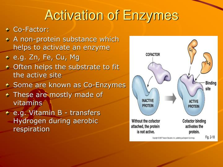 Activation of Enzymes